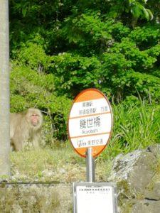 野生のサルです。帰るとき道路から撮影
