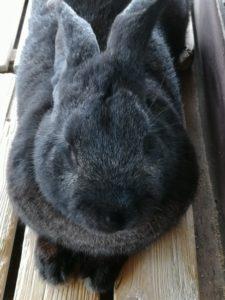 クロウサギですね