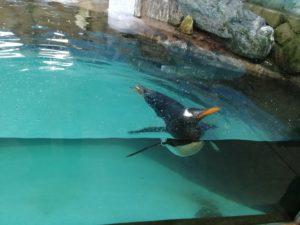 ペンギンですね。