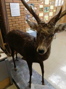 栃木県立日光自然博物館