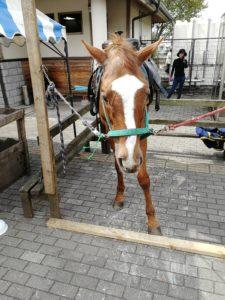 道の駅東山伊王野で馬さんに合いました。